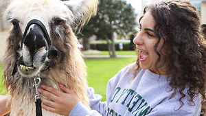 USF student with an Alpaca